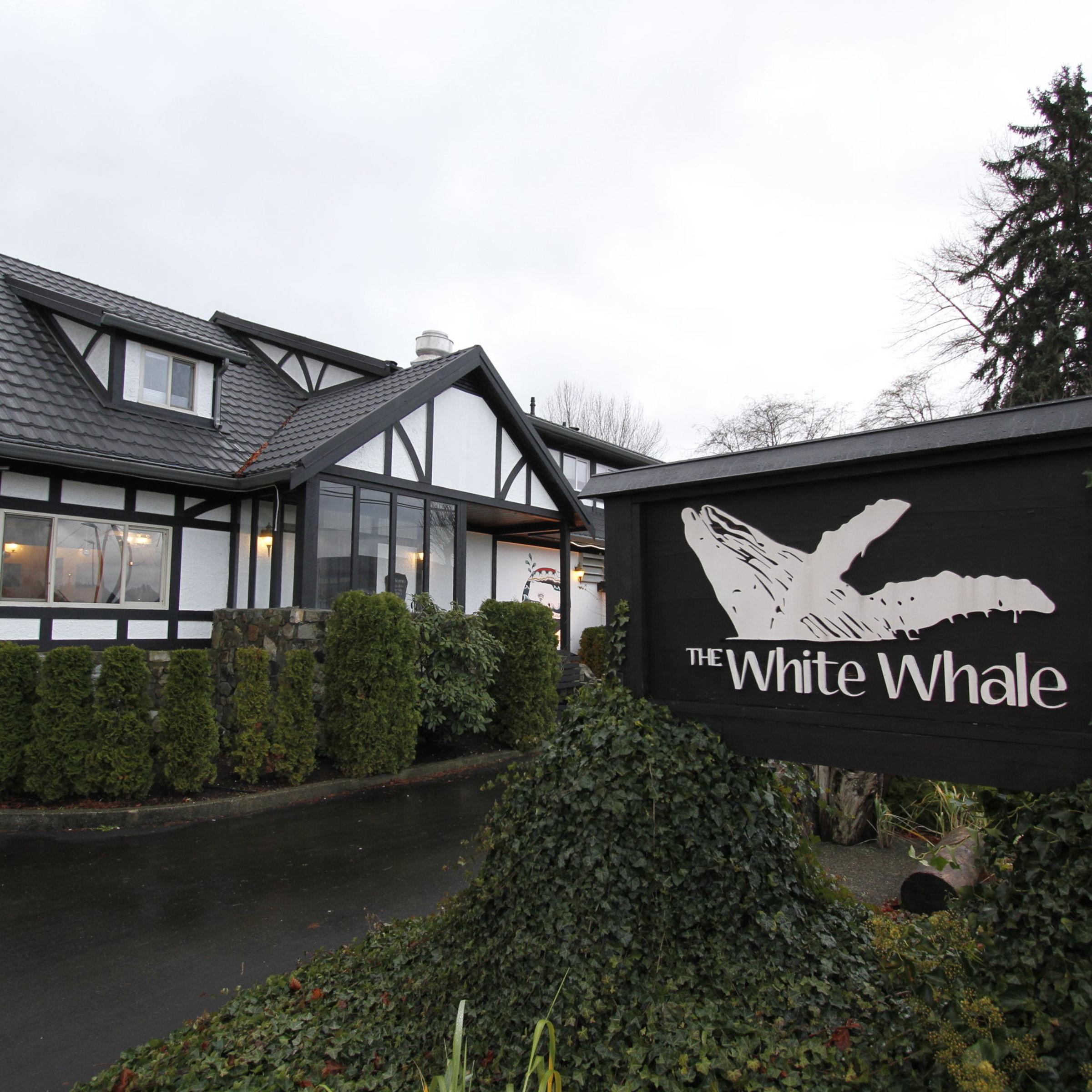 Desktop whitewhale image1